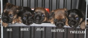 Puppies with names