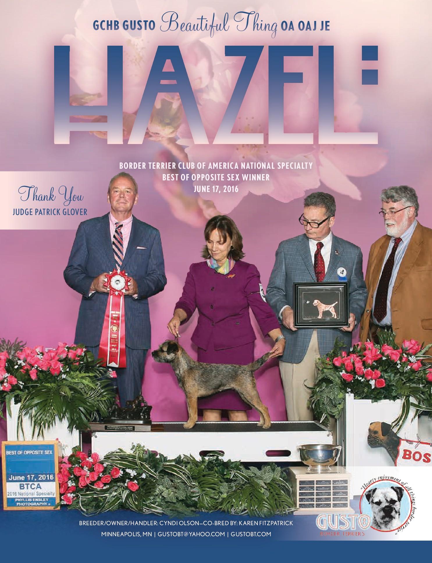 showsight-ad-hazel-final-201609