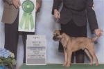 Henri Best in Show Puppy