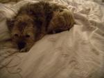Beatrix sleeping on Alix's bed