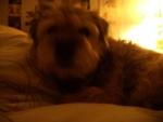 Beatrix on Alix's bed